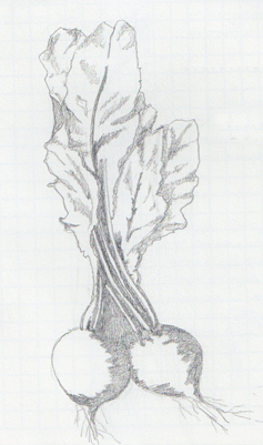 Screen Print Of A Beet A Most Serious Vegetable Spring Leaf Press