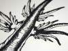 sea slug detail 2